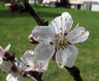 Wettertreff Salzburg - 3. April 2019 - Sind Pflanzen die besseren Messinstrumente?
