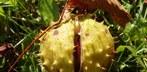 Fruchtreife im Spätsommer und Herbst immer früher