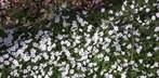 "Frühlingsblüte ""klettert"" rund 100 Meter in drei Tagen"