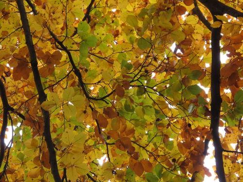 Herbstliche Farbenpracht und Klimawandel