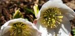 Klima im März 2012: Ungewöhnlich sonnig, trocken und warm