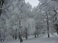 Ungewöhnlich winterlicher Frühling: In ganz Österreich Schnee und im Osten und Süden frostig
