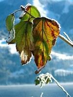 Vereinzelt Frostrekorde für zweite Aprilhälfte