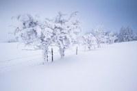 Februar: trüb, feucht, kühl