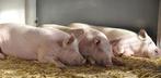 Was bedeutet der Klimawandel für die Nutztierhaltung?
