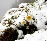 Am Sonntag Schnee bis in die Täler