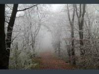 Gefrierender Regen und Raureif: Ende in Sicht