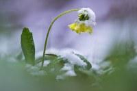 Schneefall und Frost