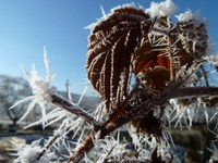 Ungewöhnliche Kälte in den letzten Februartagen